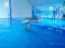 Delfinariu Nemo, Delfinii si Antrenorii