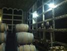Vinaria Asconia, Beciul